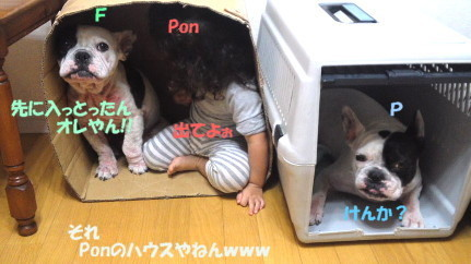 mini_111024d.jpg